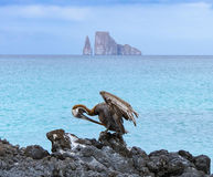 Leon Domidos or Kicker Rock, group of three rocks in Galapagos I. Slands in distance with brown pelican preening itself in foreground Stock Images