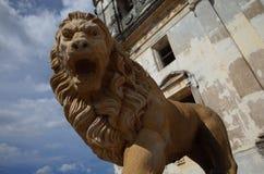 Leon Lion Fotografia Stock
