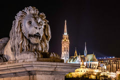 Stone statue of a lion, placed to the entry of the Chain Bridge, Budapest, Hungary. Night scene of the statues stone of a lion, placed to the entry of the Chain Royalty Free Stock Image
