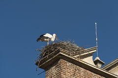 Leon Spain: stork in the nest Stock Photography