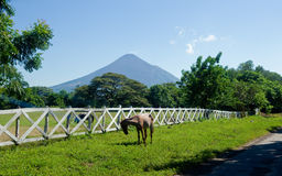 Leon Viejo scenic Nicaragua. Scenic view of Leon Viejo with horse in foreground and volcano in background, Puerto Momotombo, Nicaragua Royalty Free Stock Image