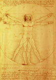 Leonardo da Vinci. Leonardo will give Vinci proportions of the construction {build} of the human body stock photos