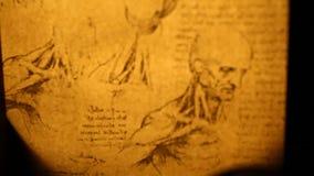 Leonardo da Vinci anatomy