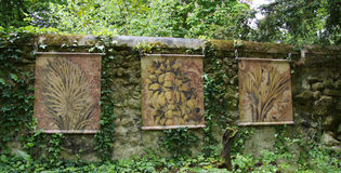 Leonardo da Vinci paintings at Clos Luce in Amboise. Leonardo da Vinci paintings of plants on wall at castle of Clos Luce in Amboise in France royalty free stock photo