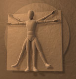 Leonardo Da Vinci's Vitruvian Man, Homo Quadratus Stock Photography