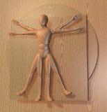 Leonardo Da Vinci's Vitruvian Man, Homo Quadratus Stock Photos