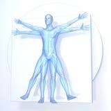 Leonardo da Vinci Vitruvian Man Imagen de archivo