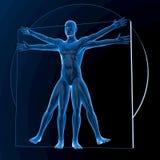 Leonardo da Vinci Vitruvian Man Lizenzfreies Stockbild