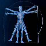 Leonardo da Vinci Vitruvian Man Photo libre de droits