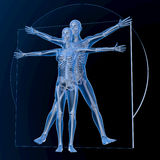 Leonardo da Vinci Vitruvian Man e mulher, par Fotos de Stock