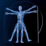 Leonardo da Vinci Vitruvian Man Royalty Free Stock Photo