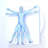 Leonardo da Vinci Vitruvian Man Stock Image