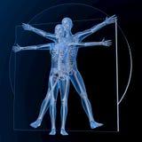Leonardo da Vinci Vitruvian Man y mujer, par Fotos de archivo