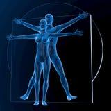 Leonardo da Vinci Vitruvian Man y mujer, par Foto de archivo libre de regalías