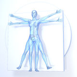 Leonardo da Vinci Vitruvian Woman. Transparent blue on white background, with bones, 3d rendering Royalty Free Stock Photos