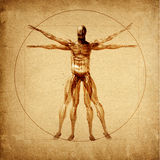 Leonardo's Vitruvian Man Royalty Free Stock Photo