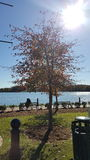 Leonardtown Warf. Beautiful fall clear day at Leonardtown Warf Stock Photos