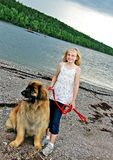 Leonberger Dog and Young Girl Stock Image
