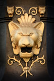 Leone Fotografia Stock