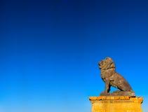 Leone Fotografia Stock Libera da Diritti