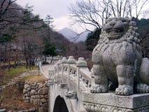Leone asiatico in Corea Fotografia Stock