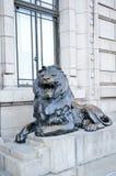 Leone bronzeo Immagini Stock Libere da Diritti