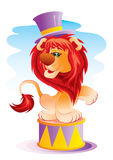 Leone in circo Fotografia Stock Libera da Diritti