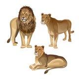 Leone con due leonesse illustrazione di stock