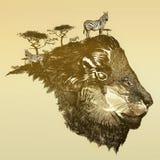 Leone della savanna Immagini Stock Libere da Diritti