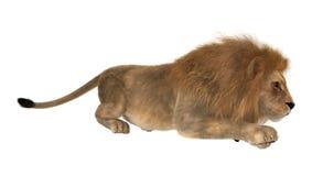 Leone di caccia Fotografia Stock