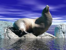 Leone di mare sulla roccia Fotografie Stock