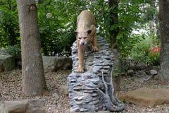 Leone di montagna Fotografia Stock Libera da Diritti