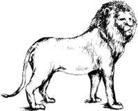 Leone disegnato a mano Fotografie Stock Libere da Diritti