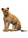 Leone femminile, seduta della leonessa, animale selvatico isolato su bianco Fotografia Stock