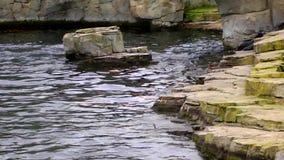 Leone marino archivi video