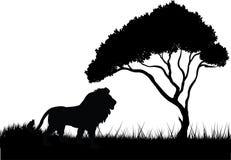 Leone nella siluetta della giungla fotografia stock