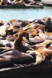 Leones de mar Imagenes de archivo