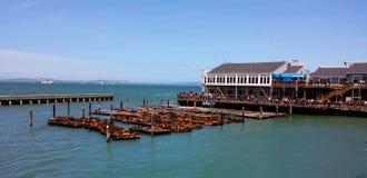 Leones de mar del embarcadero 39 de San Francisco imagen de archivo