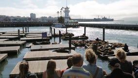 Leones de mar del embarcadero 39 de San Francisco metrajes