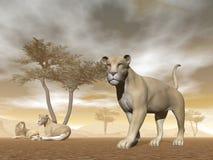 Leones en la sabana - 3D rinden stock de ilustración