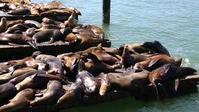 Leones marinos almacen de metraje de vídeo
