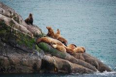 Leones marinos de Alaska Fotos de archivo libres de regalías