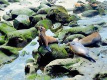 Leones marinos en La Jolla California imagen de archivo