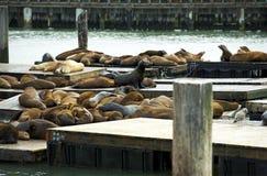 Leones marinos en puerto Foto de archivo libre de regalías