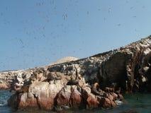 Leones marinos y pájaros Imagen de archivo
