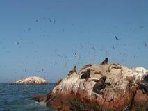 Leones marinos y pájaros Fotografía de archivo