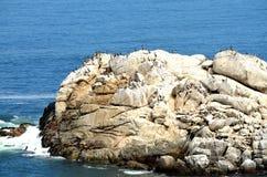 Leones marinos y pelícanos, ciudad de Viña Del Mar, chile Foto de archivo libre de regalías