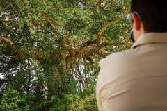 Leones turísticos de los observs en un árbol Imagen de archivo