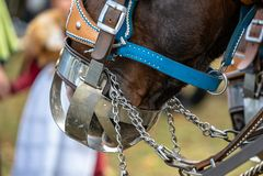 Leonhardi decorated big cold blooded horses Bad Toelz Germany. Bavaria royalty free stock photo