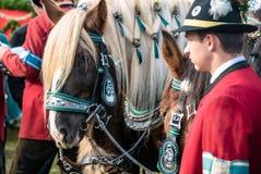 Leonhardi decorated big cold blooded horses Bad Toelz Germany. Bavaria stock photos